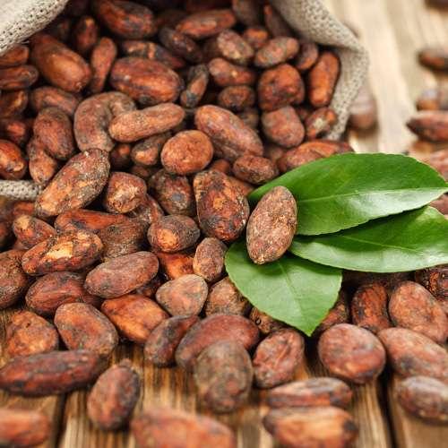 Kakaobohnen Single-Origin Venezuela Guasare geröstet