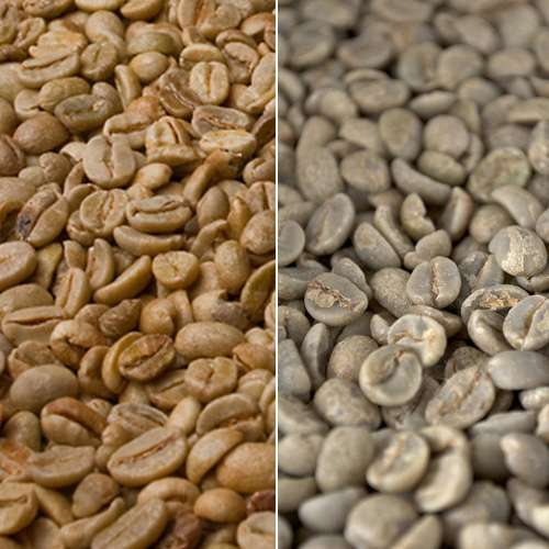Rohkaffee Mexiko Maragogype
