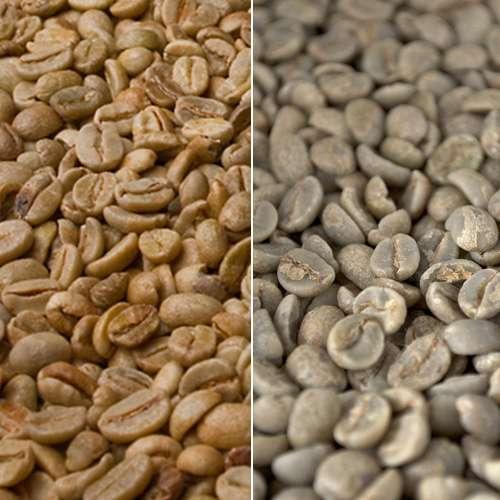Rohkaffee Indien Perlbohne