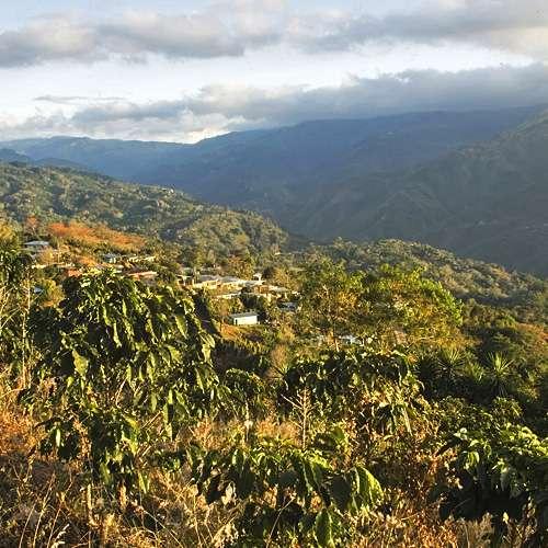 Mexico Chiapas Bio Arabica Kaffee