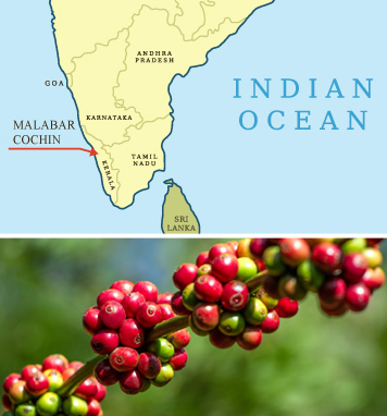 India-Monsooned-Malabar-AA