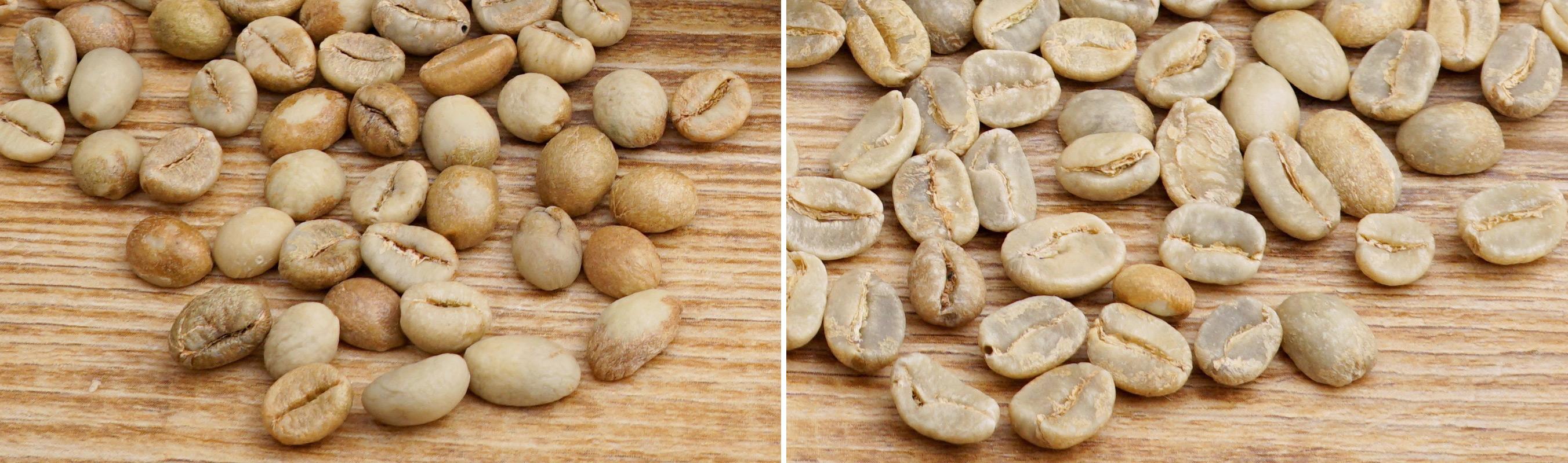 arabica-robusta-kaffee-vergleich