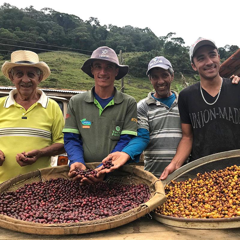 Kaffee-Ernte-Brasilien